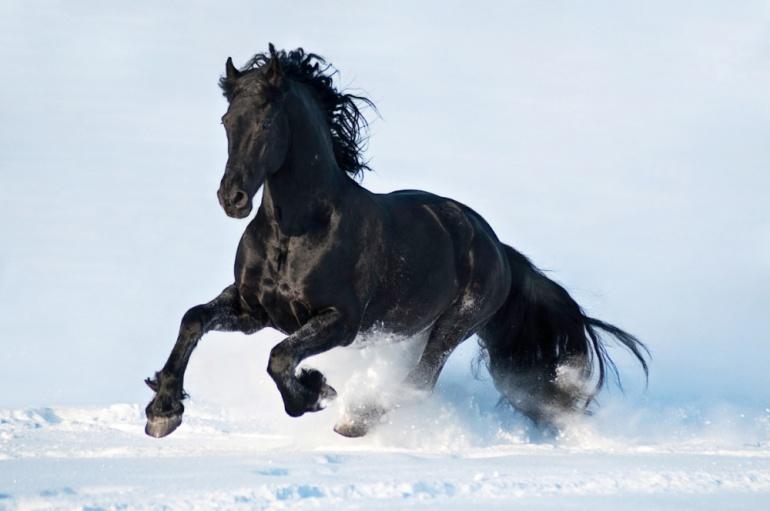 cavalli-incredibili-001