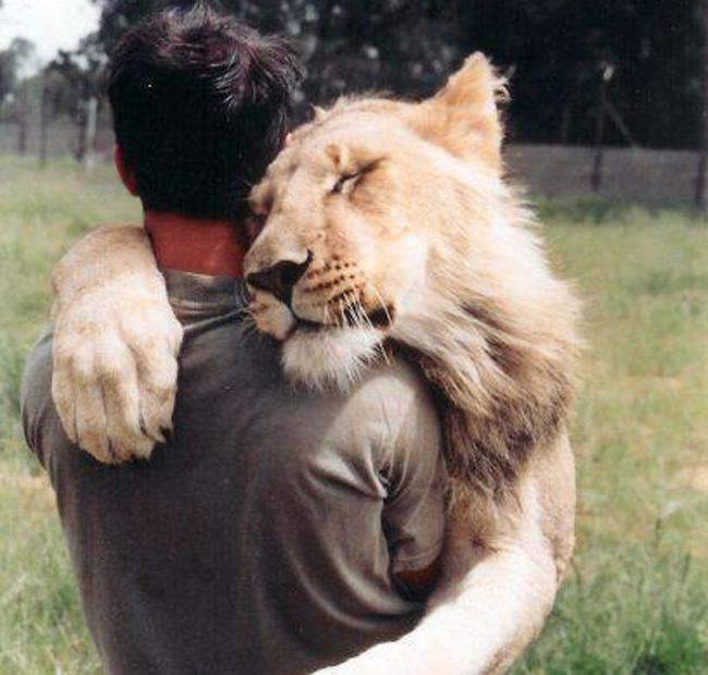 luomo-che-abbraccia-i-leoni