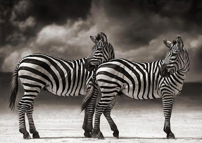 Nick Brandt - On this Earth 2