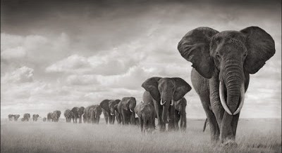 Nick Brandt - On this Earth