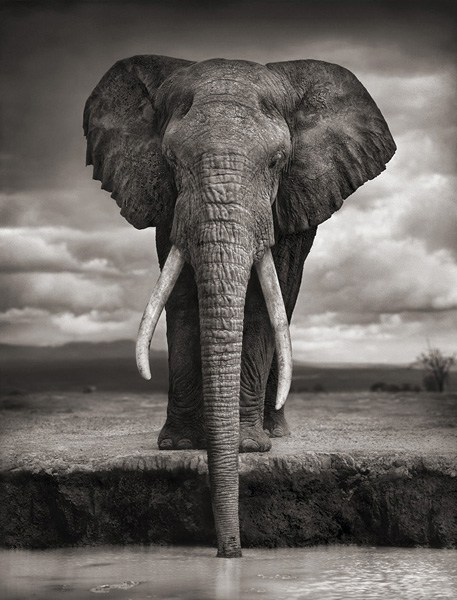 "Nick Brandt ""On this Earth"""