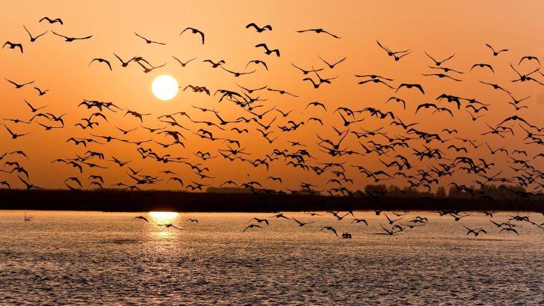 stormo-di-uccelli,-lago-154431